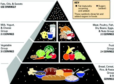 Usda food pyramid history in 1988 several usda scientists obtained copies of swedens food pyramid at an international conference and used it as a graphical basis for a new forumfinder Images